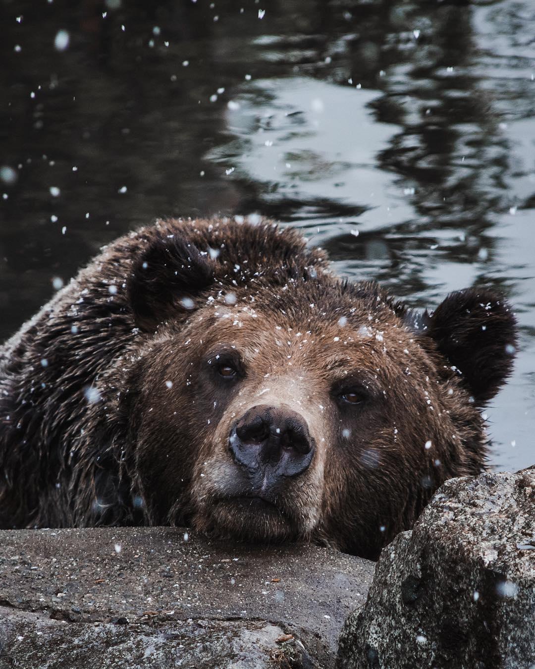 Дикие животные на снимках Максима Исраэля Кольера