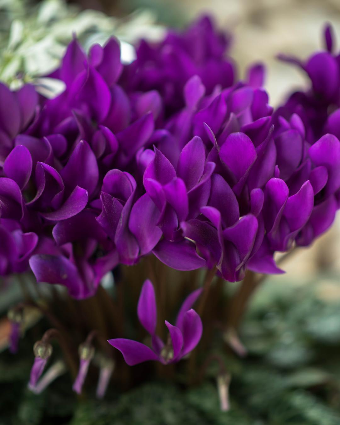 Красивые фотографии цветов от Хисаши Сугам