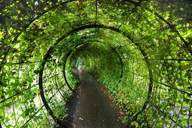 Сад ядовитых растений Альнвика в Англии