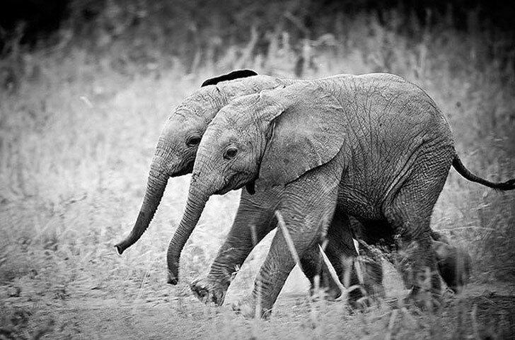Снимки пар близнецов из мира животных