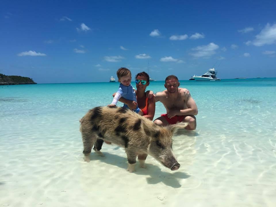 Свиньи с Багамских островов находятся под угрозой вымирания