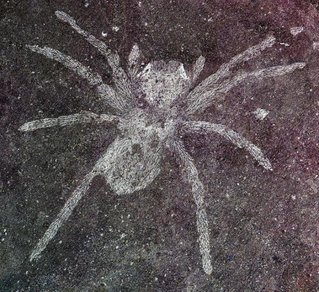Ученые обнаружили пауков возрастом 110 млн лет