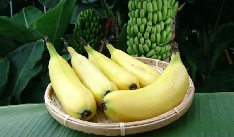 В Японии вывели сорт банана со съедобной кожурой