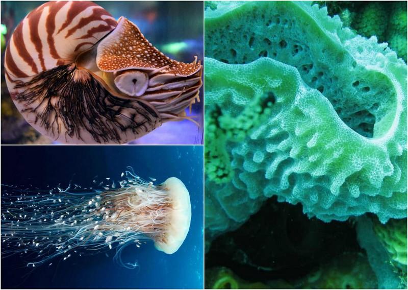 Древние существа, которые дожили до наших дней
