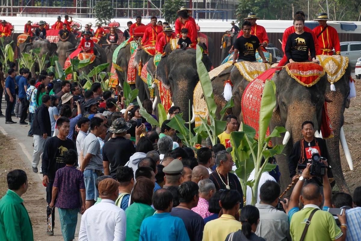 Национальный праздник тайского слона