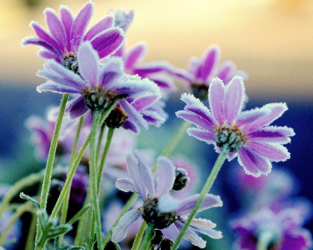 Утренний иней на траве, цветах и деревьях