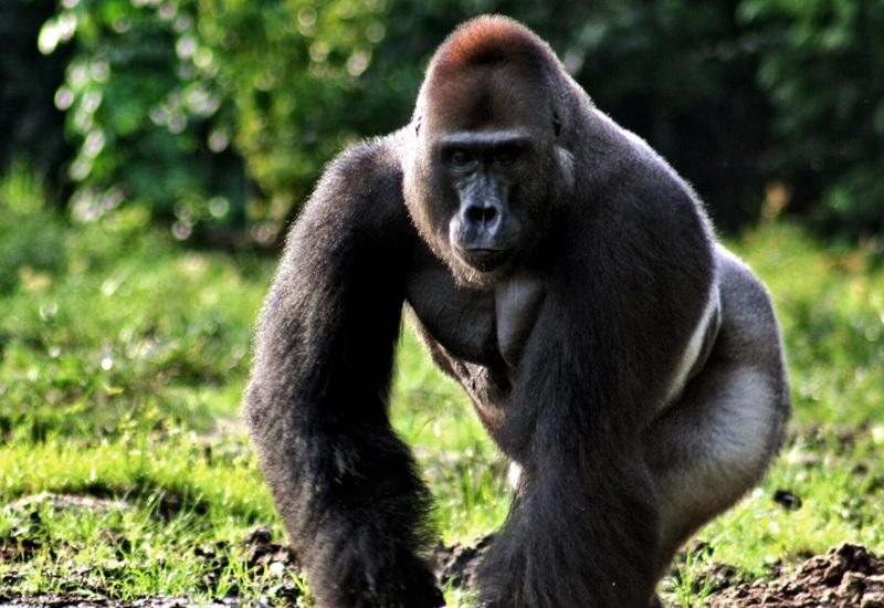 7 животных, которые способны захватить мир