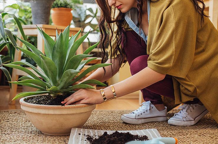 Комнатные растения, полезные для здоровья