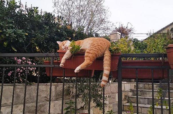Кошки спят в самых невообразимых местах и позах