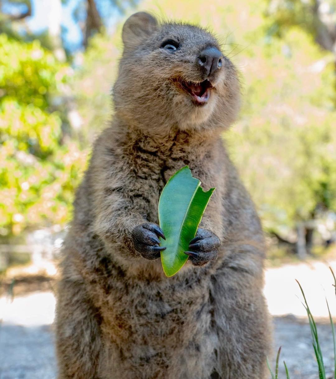 Милые австралийские животные для тех, кто боится змей и пауков