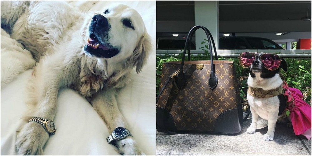 Rich Dogs Of Instagram: о жизни состоятельных собак