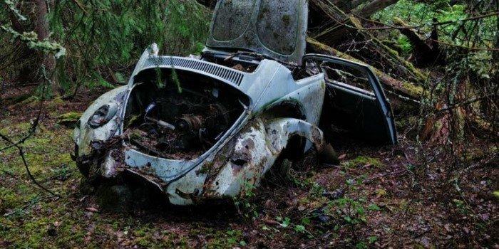 Странные и даже жуткие вещи, которые люди обнаружили в лесу