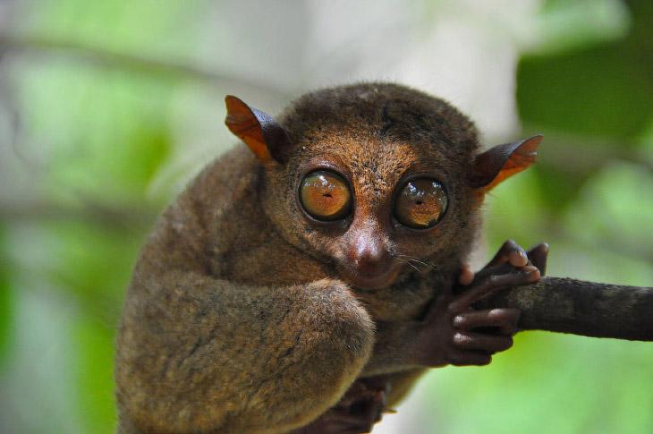 Удивительные создания и где они обитают