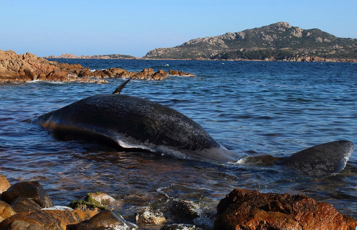 В желудке погибшего кита обнаружили 22 кг пластиковых отходов