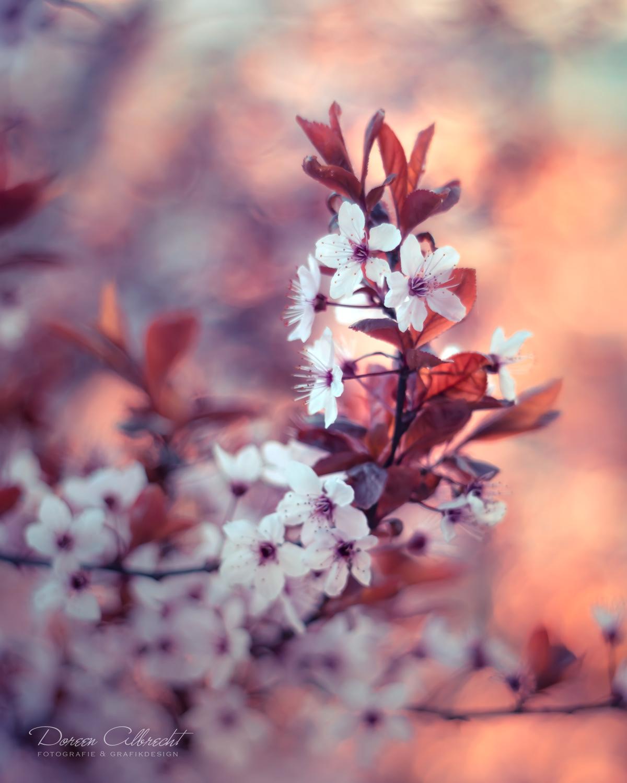 Волшебные снимки цветов от Дорин Альбрехт