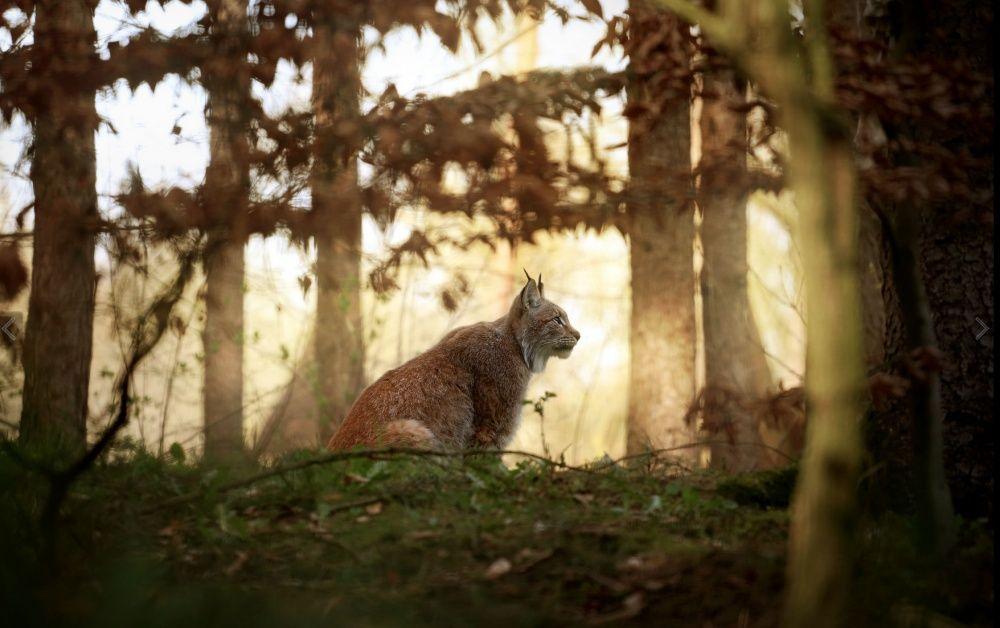 Хранители леса на снимках