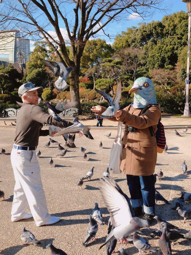 Чудаки, которые любят жить в маске голубя