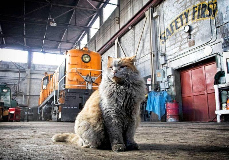 Кошка по кличке Грязь — талисман музея железной дороги