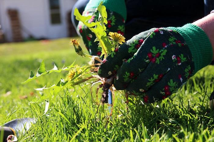 Простое средство для борьбы с сорняками на даче