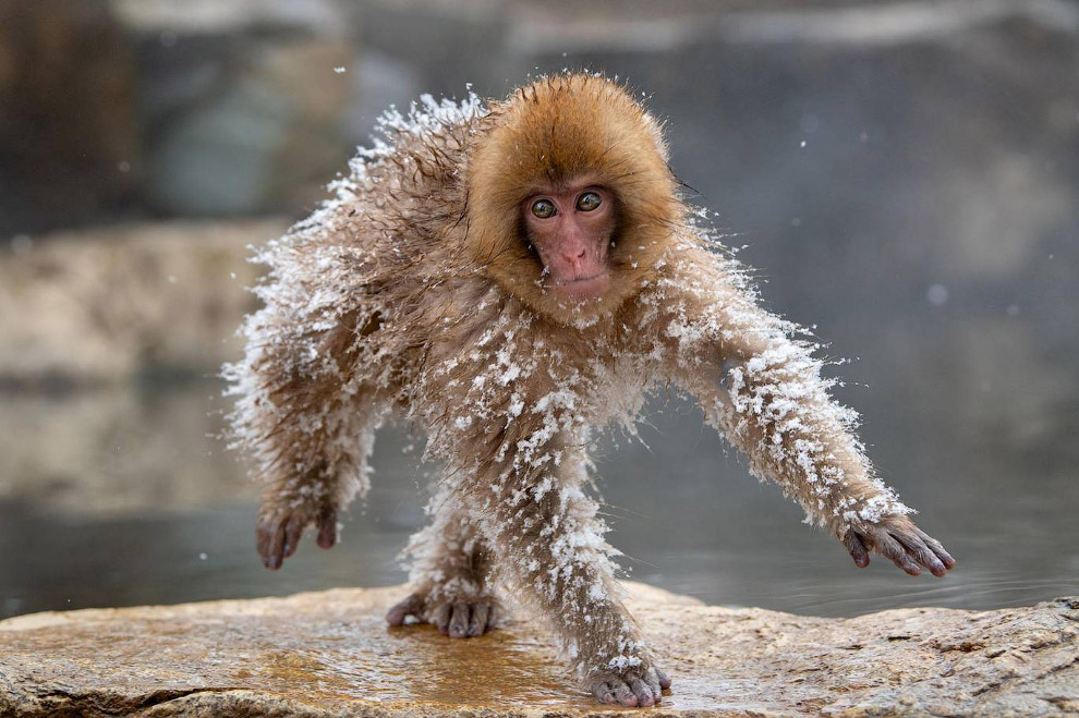 Смешной фотоконкурс Comedy Wildlife Photography Awards 2019