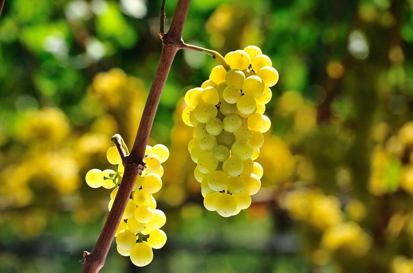 5 причин, почему стоит есть виноград