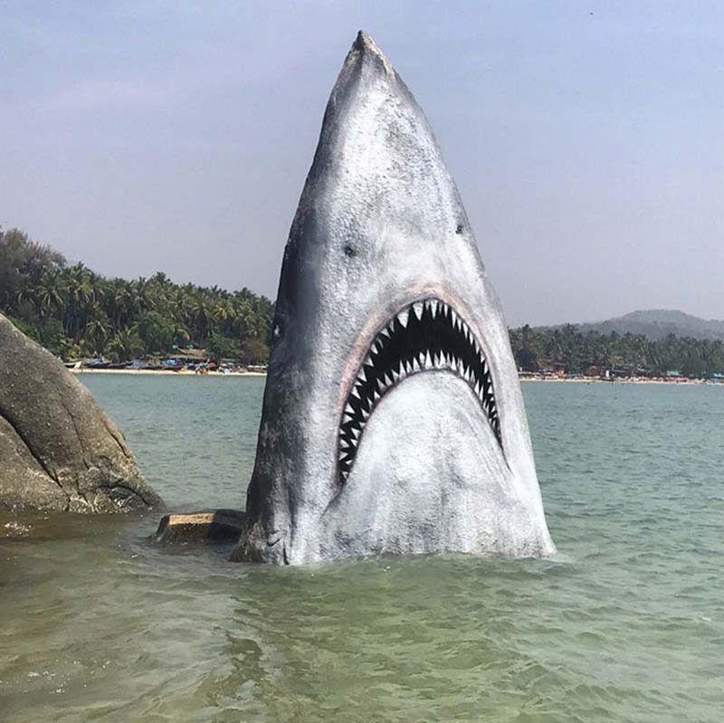 Акула-скала на пляже Гоа популярна у туристов