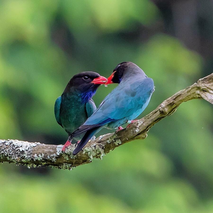 Красивые птицы на снимках Кейсуке Ода