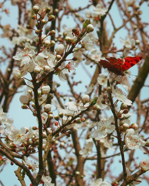 Красивые снимки цветов от Нилуфар Балалами