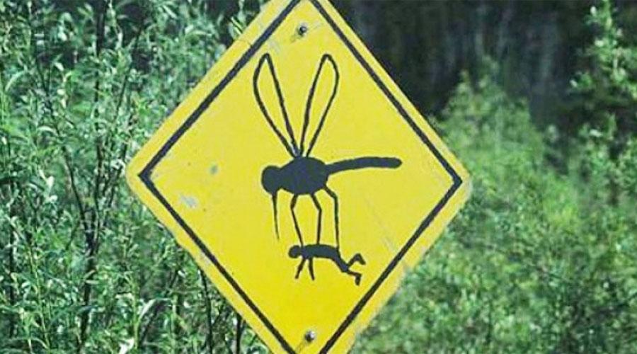 Почему одних комары кусают чаще, чем других