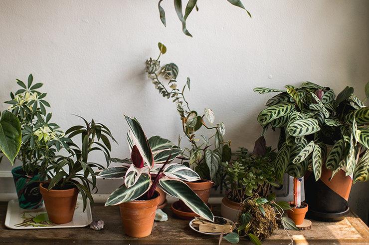 6 плюсов в пользу домашних растений