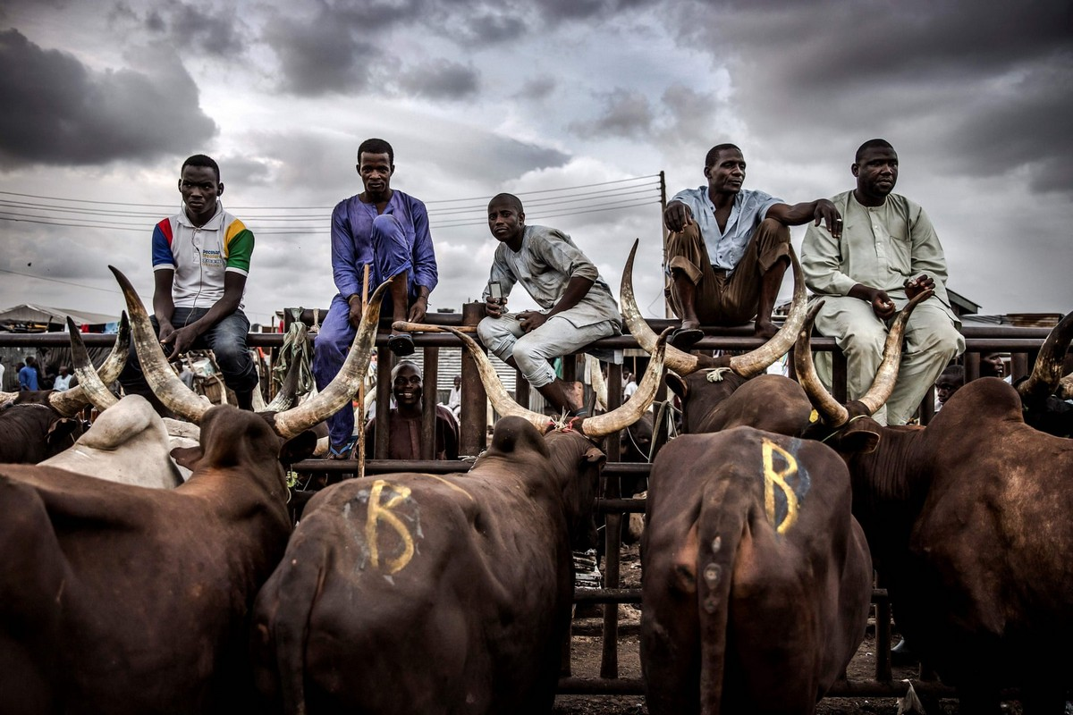 Нигерийский скотоводческий народ Фулани
