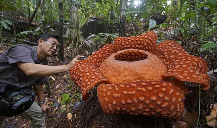 Очень удивительные растения нашей планеты