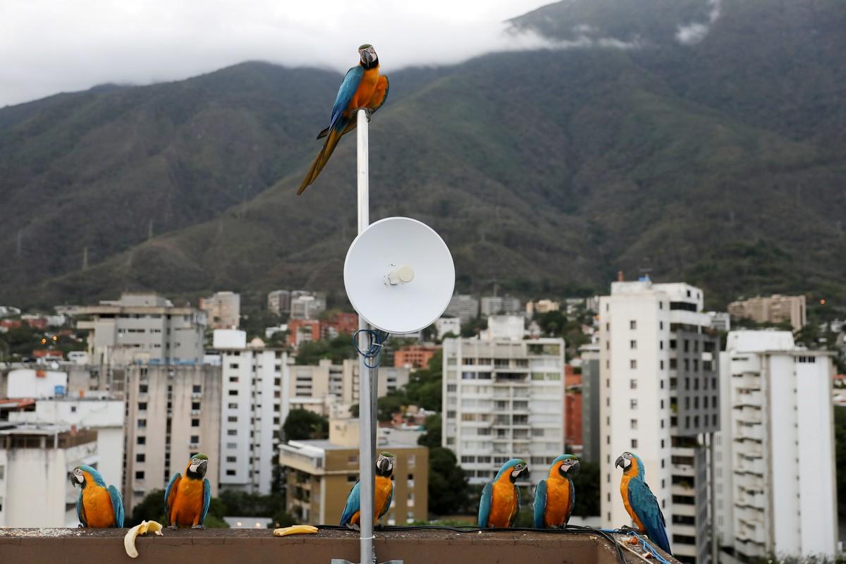 Позитивные пернатые Каракаса