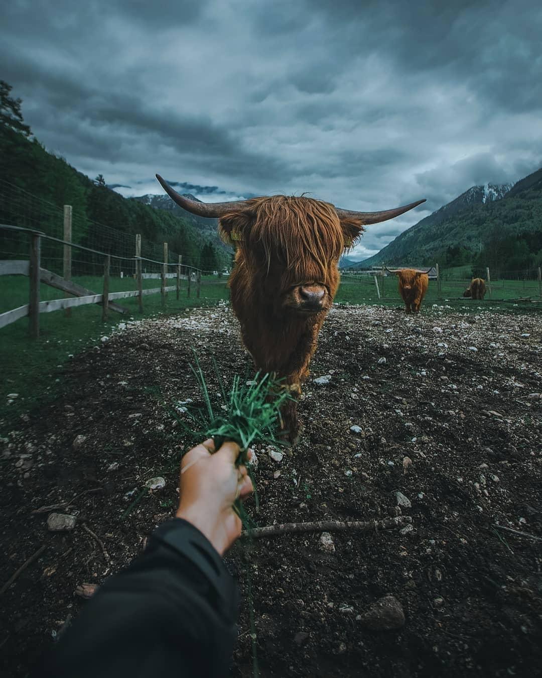Природа, животные и путешествия на снимках Гарри Томляновича