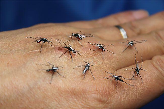 Реалистичные бумажные комары, которых так и хочется прибить
