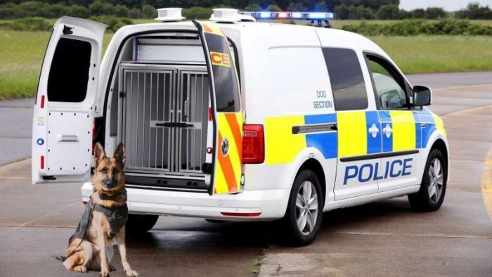 Volkswagen Caddy стал машиной для перевозки служебных собак