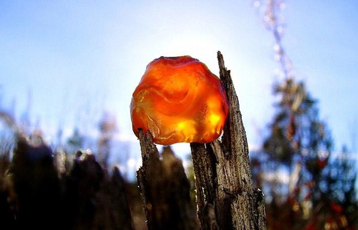 Янтарь всегда считался особым камнем
