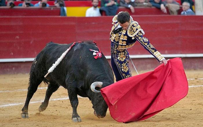 Будет ли запрещена коррида в Испании
