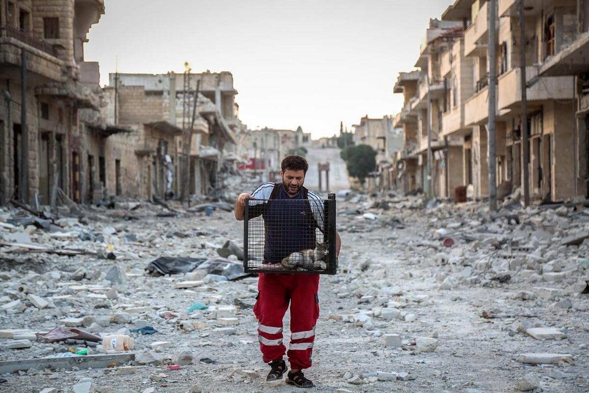 «Человек-кот из Алеппо» продолжает спасать бездомных животных