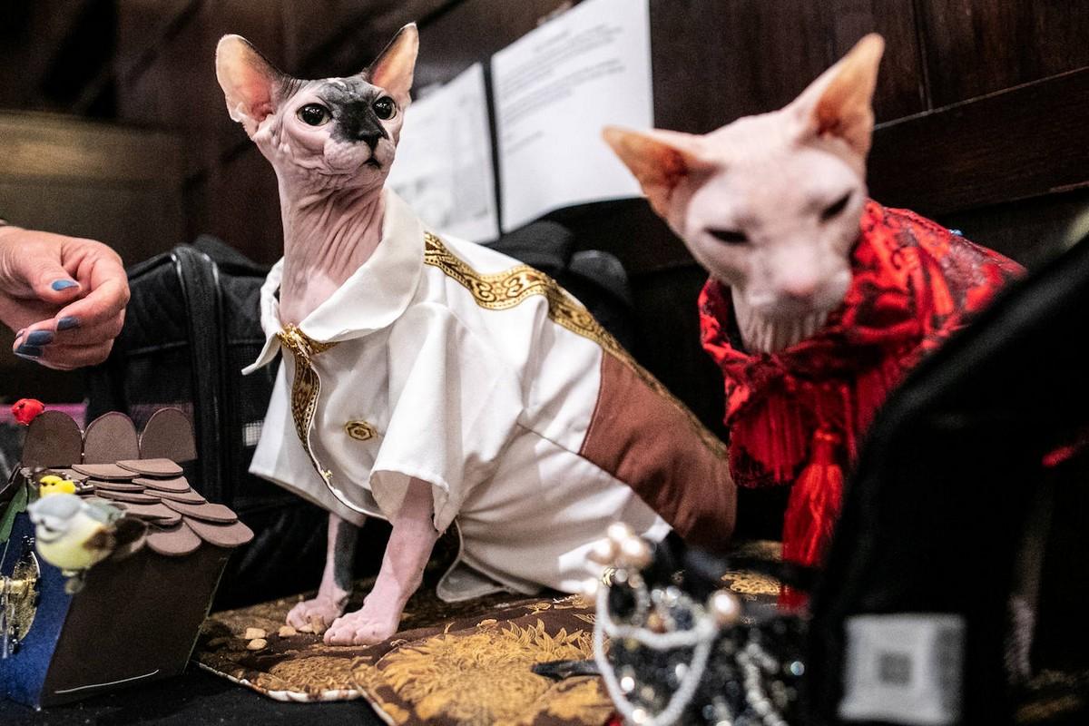 Ежегодный модный показ среди кошек в Нью-Йорке