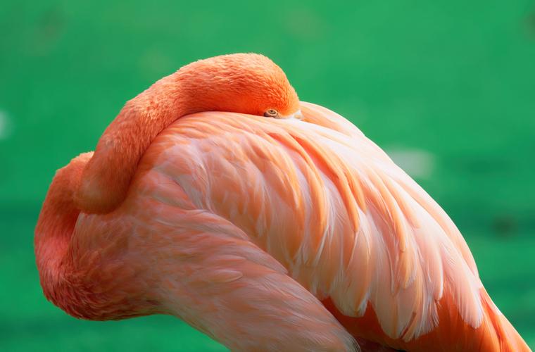 Почему птицы прячут клюв под крыло