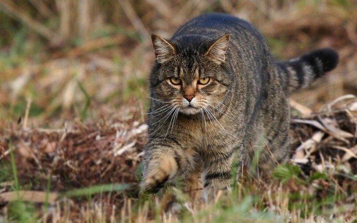 20 интересных фактов о кошках, которые вы могли не знать