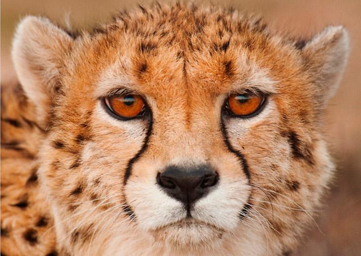 5 самых редких диких кошек