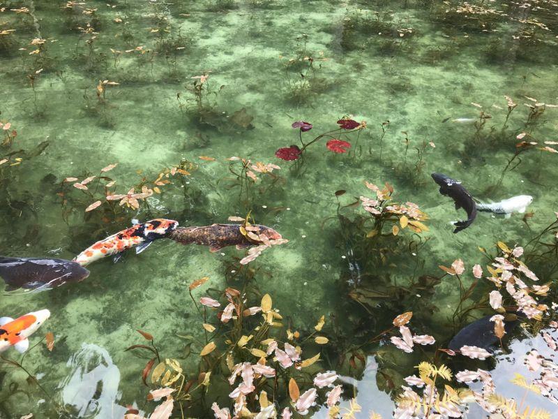 Это не картина Моне, а реальный пруд в Японии