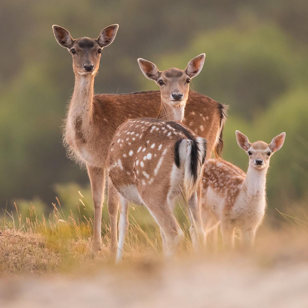 Красота животных на снимках Дика Ван Дуйна