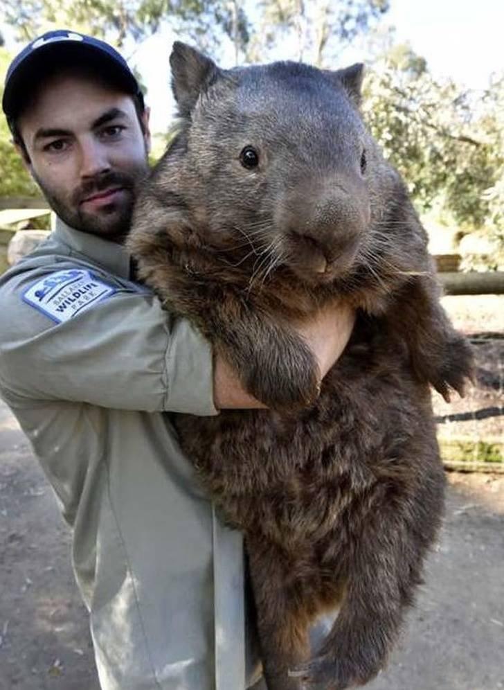 Разные животные невероятных размеров