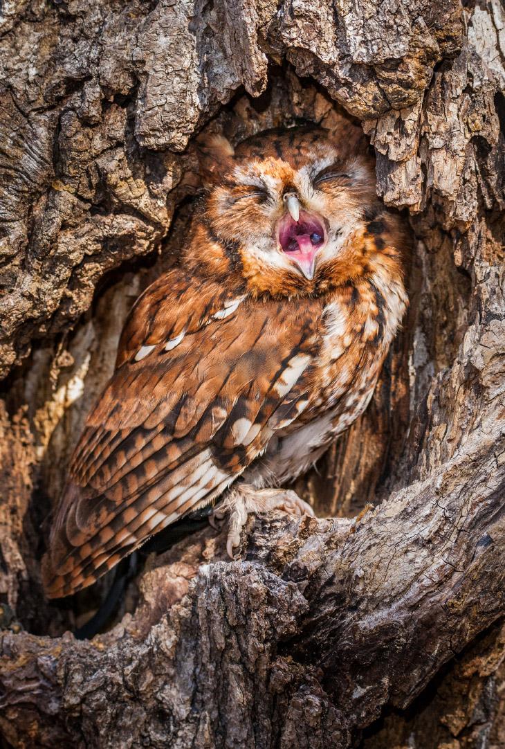 Зевающие животные на снимках