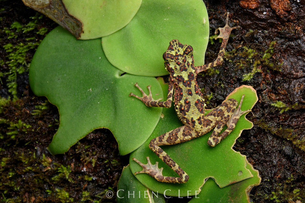 Животные и дикая природа на снимках Чэна Си Ли