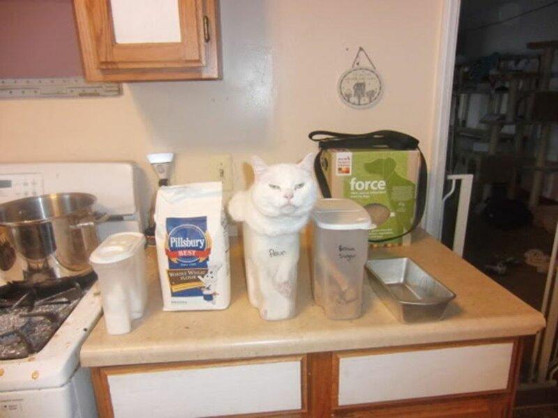 15 котов, логику которых нам не понять