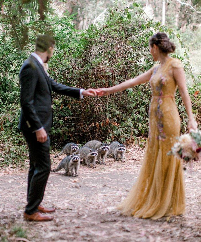 Банда енотов ворвалась на свадебную фотосессию